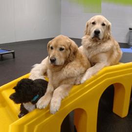Dogtopia Services