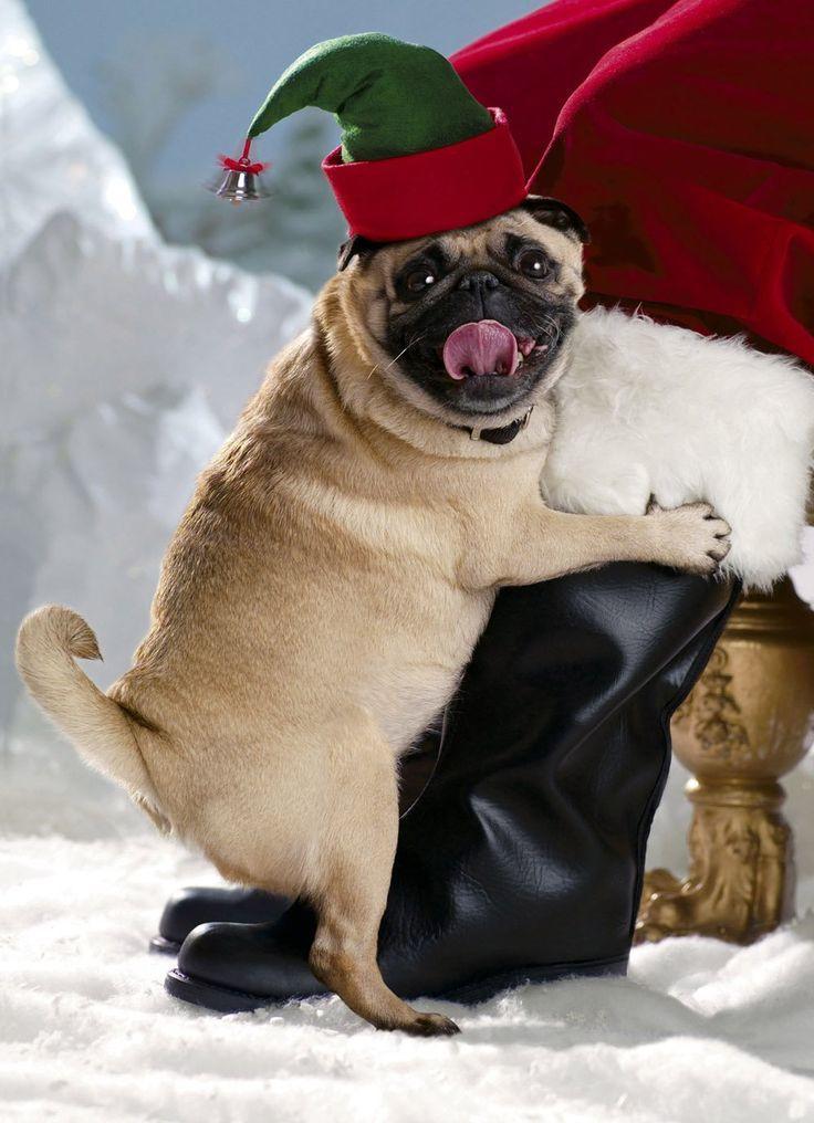 Dog Mounting Humans Related Keywords Dog Mounting Humans