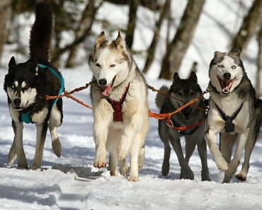 how to become your dog's pack leader