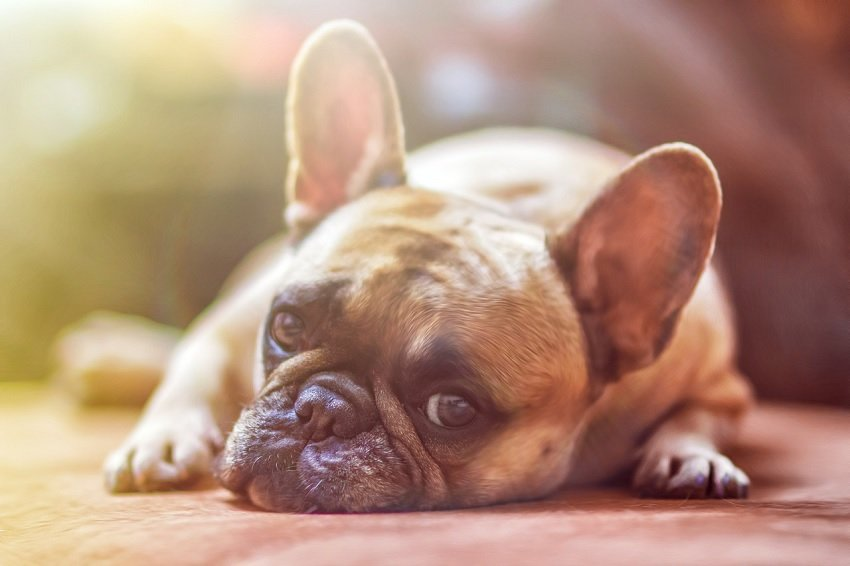 how to stop dog from being fearful