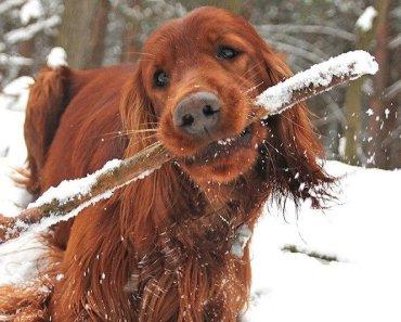 dog cold
