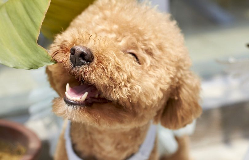 dogs that are hypoallergenic