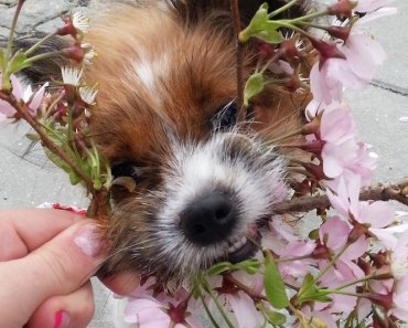 best natural remedies dogs