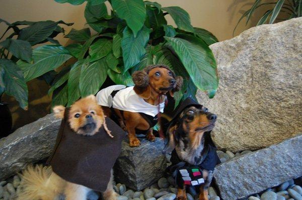 starwars doggie costumes