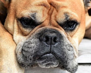 treating dog arthritis