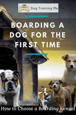Boarding a Dog for the First Time