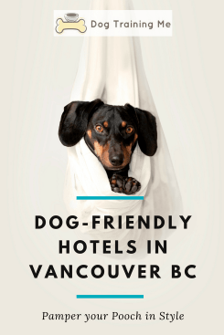dog friendly hotels in vancouver bc