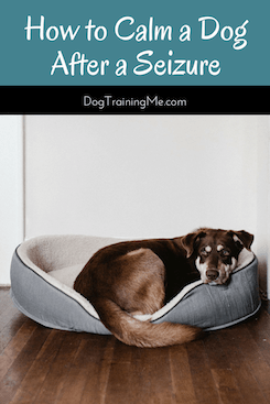 How to Calm a Dog After a Seizure