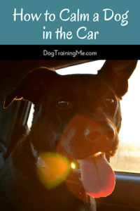 How to Calm a Dog in the Car