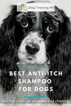 best anti itch shampoo for dogs