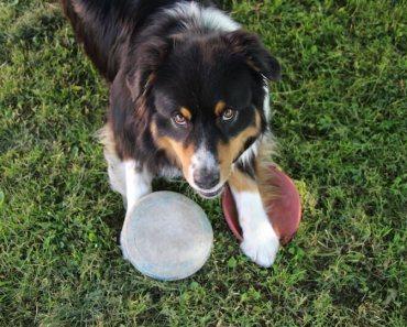 easy dog tricks