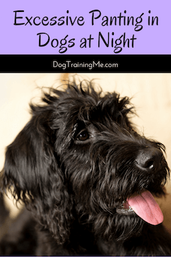 excessive panting in dogs at night