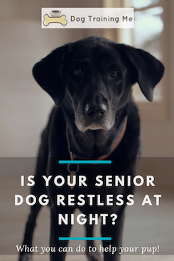 senior dog restless at night