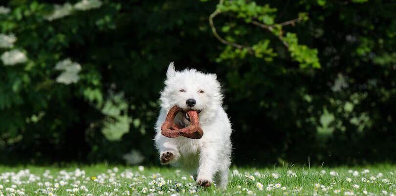 teach a dog to search
