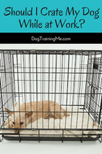 should I crate my dog while at work