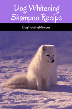dog whitening shampoo recipe