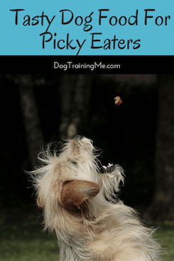 tasty dog food for picky eaters