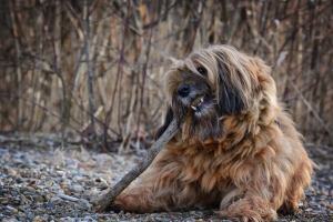 dog chewing on wood