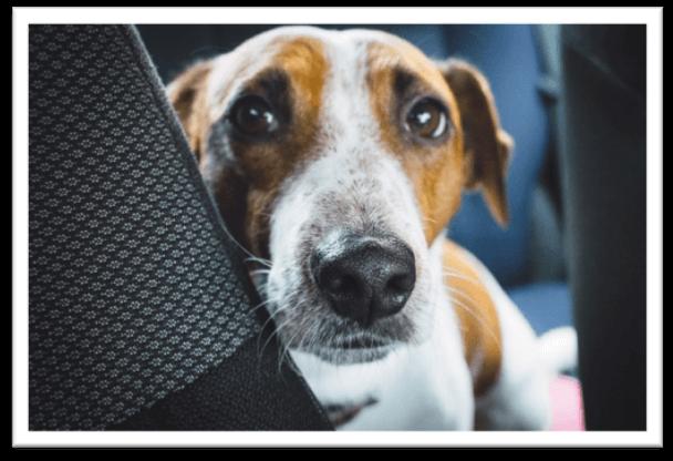 dog sedative for car travel