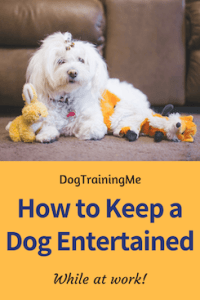 how to keep a dog entertained while at work
