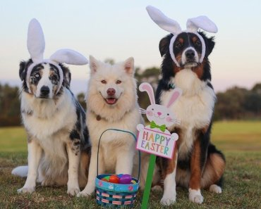 easter foods harmful to dogs