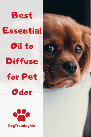 best essential oils to diffuse for pet odor