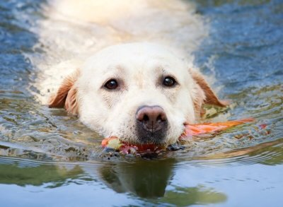 take dog for swim