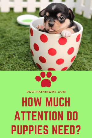 how much attention puppies need