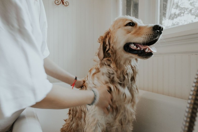 dog conditioner for itchy skin
