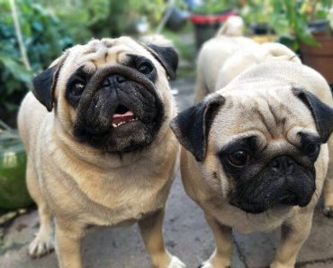 getting a second dog