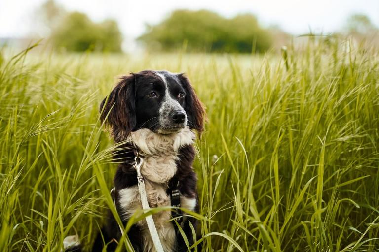 ways to go eco-friendly with dog