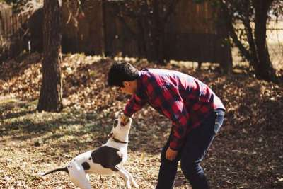 exercise to keep dog healthy