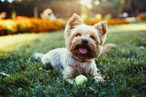 dogtrix-training