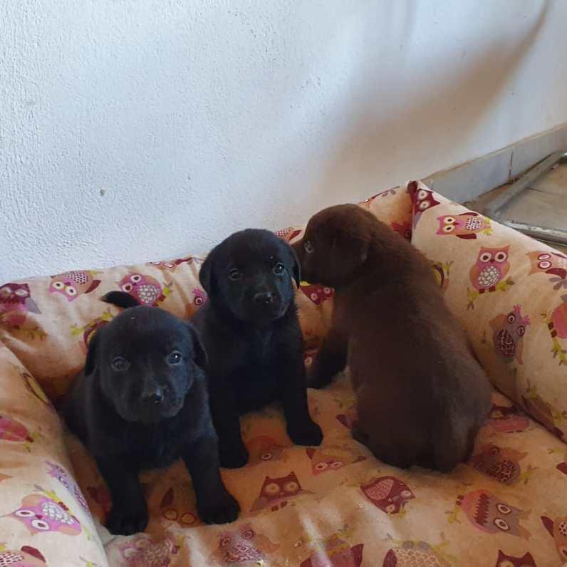 cuccioli nuovi nati by Dogvillage Cunardo_4
