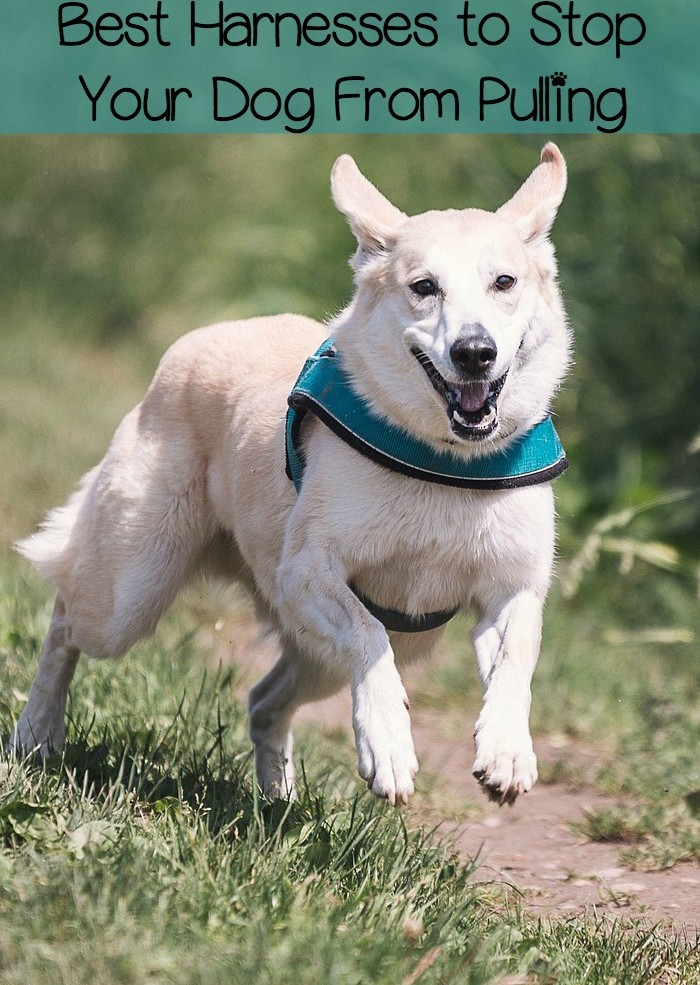 Best No Pull Dog Harnesses For Walking Your Dog