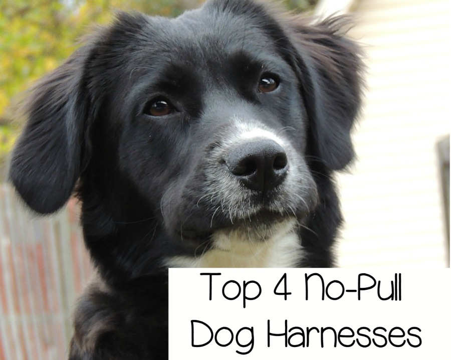 Top 4 Adjustable No Pull Dog Harnesses Dogvills