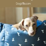 The Five Best Dog Beds For Older Dogs Http Www Dogvills Com