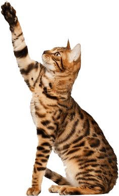 cat sitting chat patte