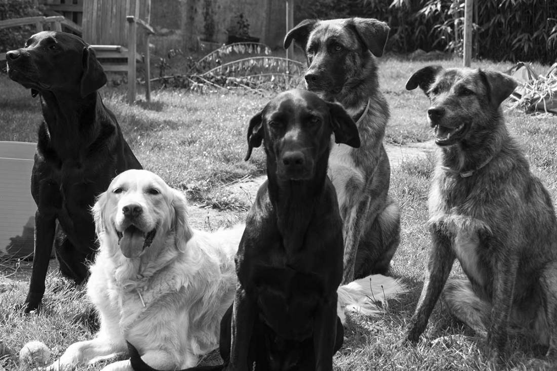 Doggy day care 5 chiens