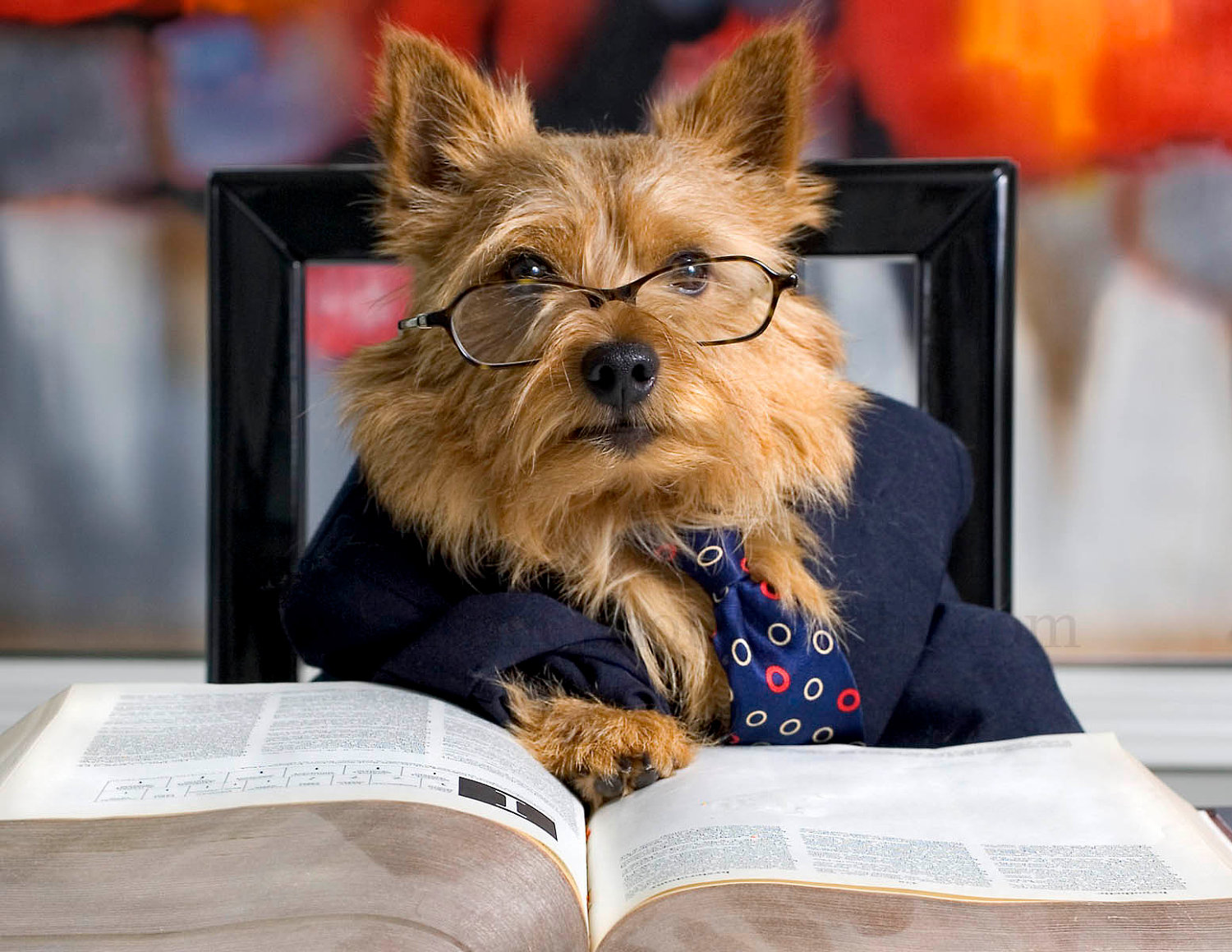 dog teacher images - reverse search