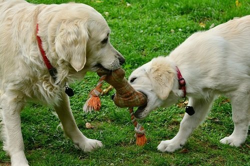 good toys for puppies