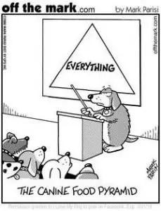 canine food pyramid