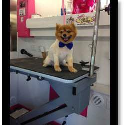 Ten Reasons To Use A Mobile Dog Groomer