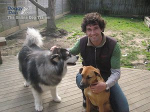 Calming Aggressive Dogs | stop aggressive dog behavior | stopping a dog being aggressive | how to calm aggressive an dog