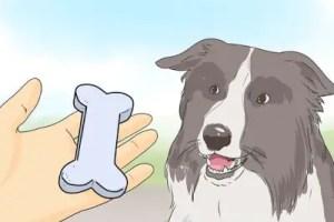 Dog Training Reward Programs