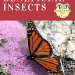 Find out all the benefits of bugs in your garden.