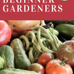 Tips to help you start a successful garden now!