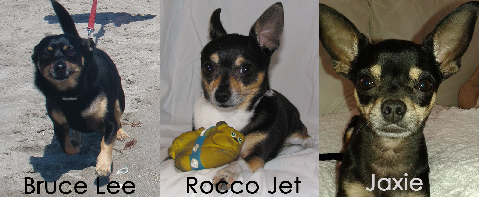 Bruce Lee, Rocco Jet and Jax