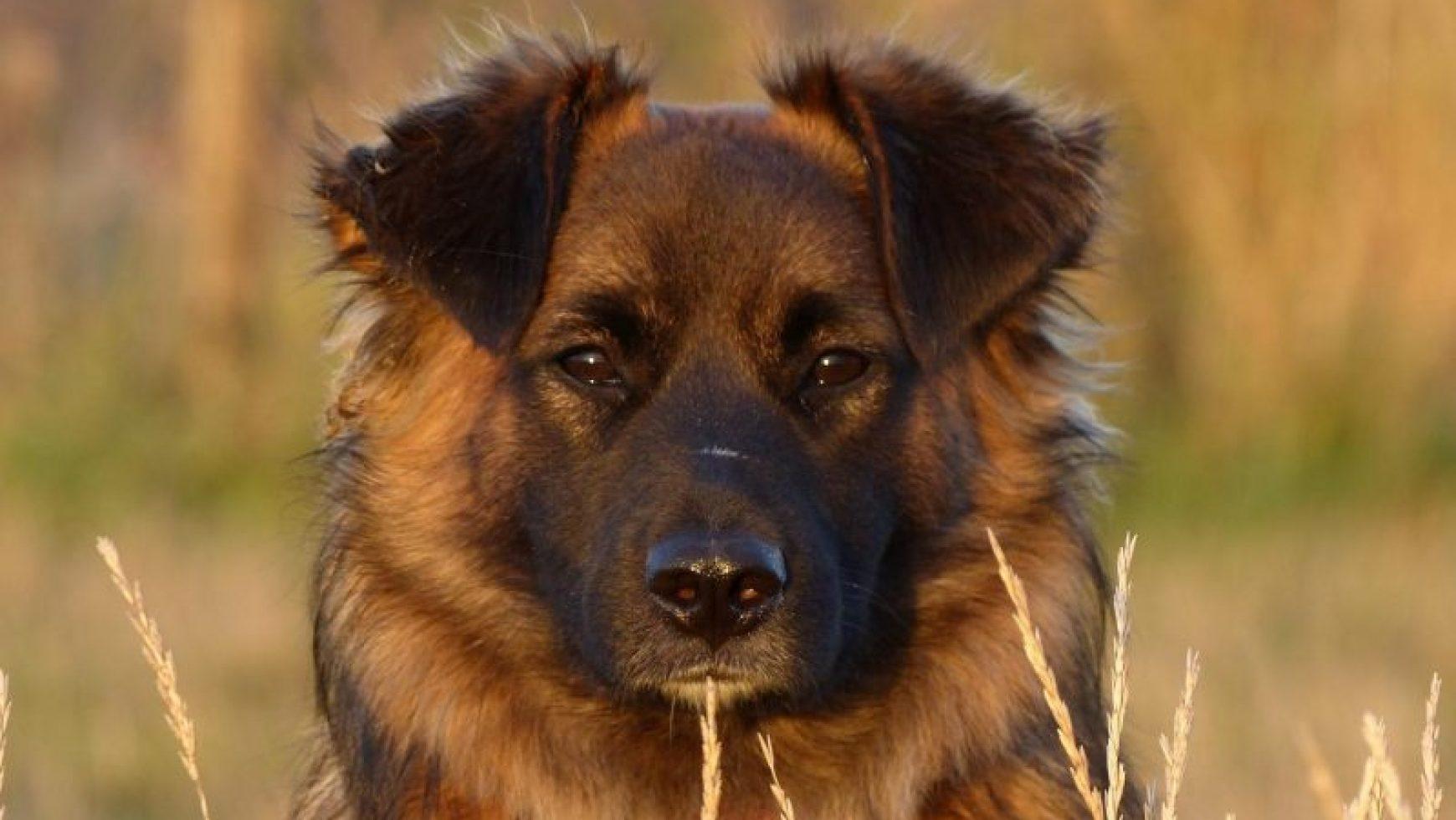 Dog Illnesses Archives