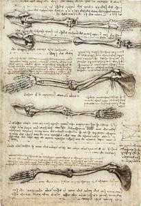 Leonardo's study of the movement of biceps in the arm.